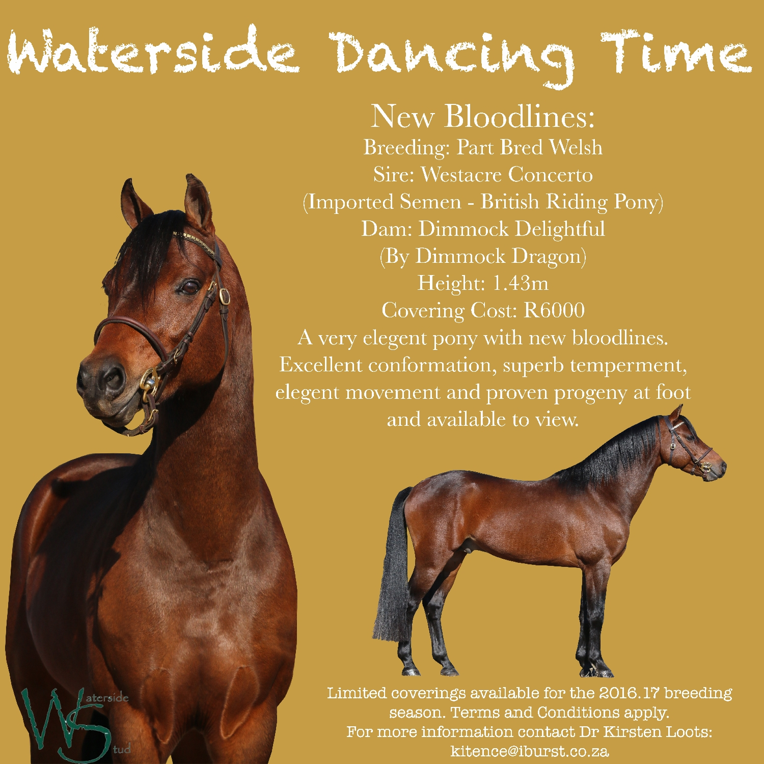 waterside-dancing-time